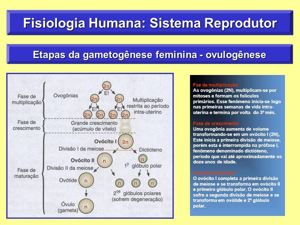 Fisiologia Humana: Sistema Reprodutor