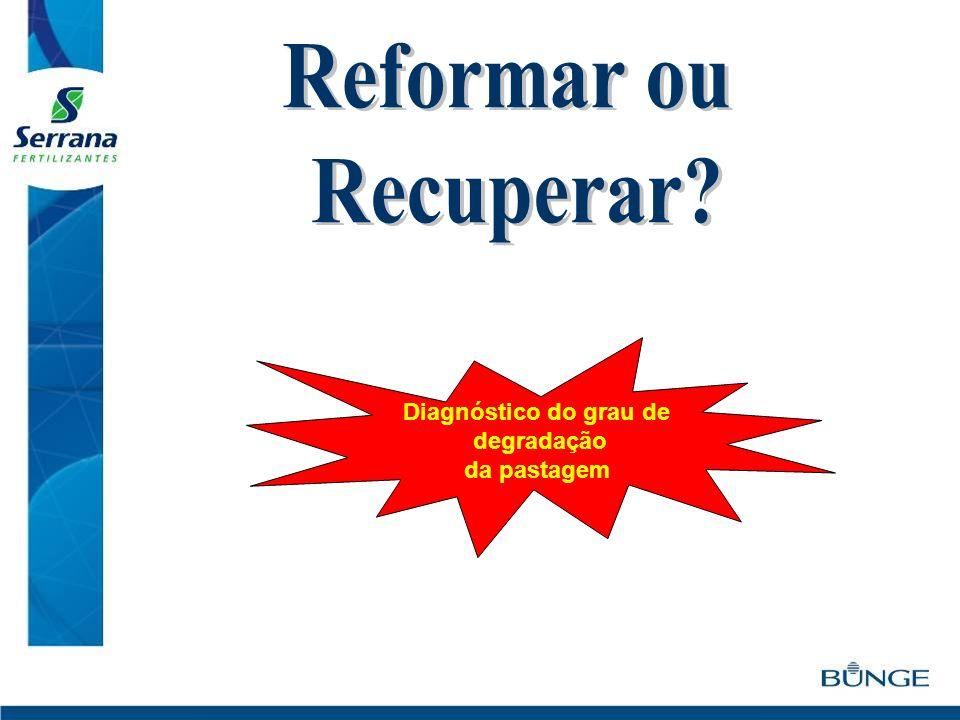 Reformar ou Recuperar Diagnóstico do grau de degradação da pastagem