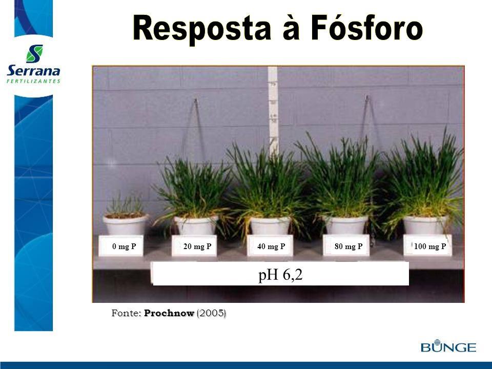 Resposta à Fósforo pH 6,2 Fonte: Prochnow (2005) 0 mg P 20 mg P