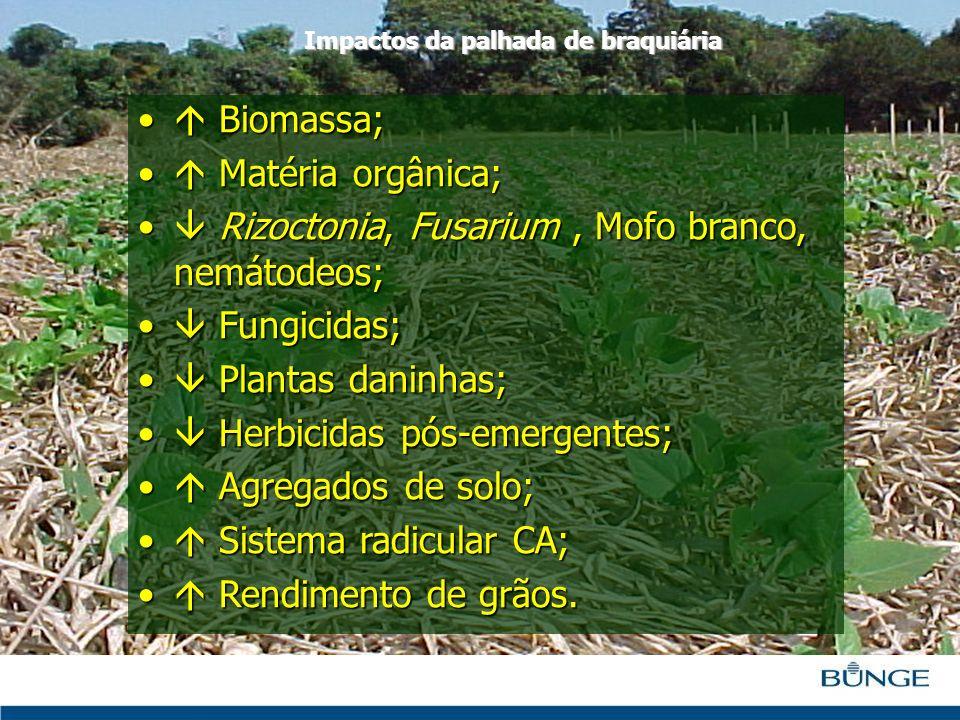  Rizoctonia, Fusarium , Mofo branco, nemátodeos;  Fungicidas;