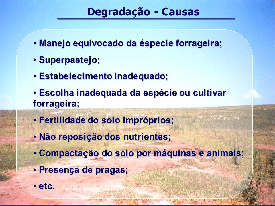 Degradação - Causas Manejo equivocado da éspecie forrageira;