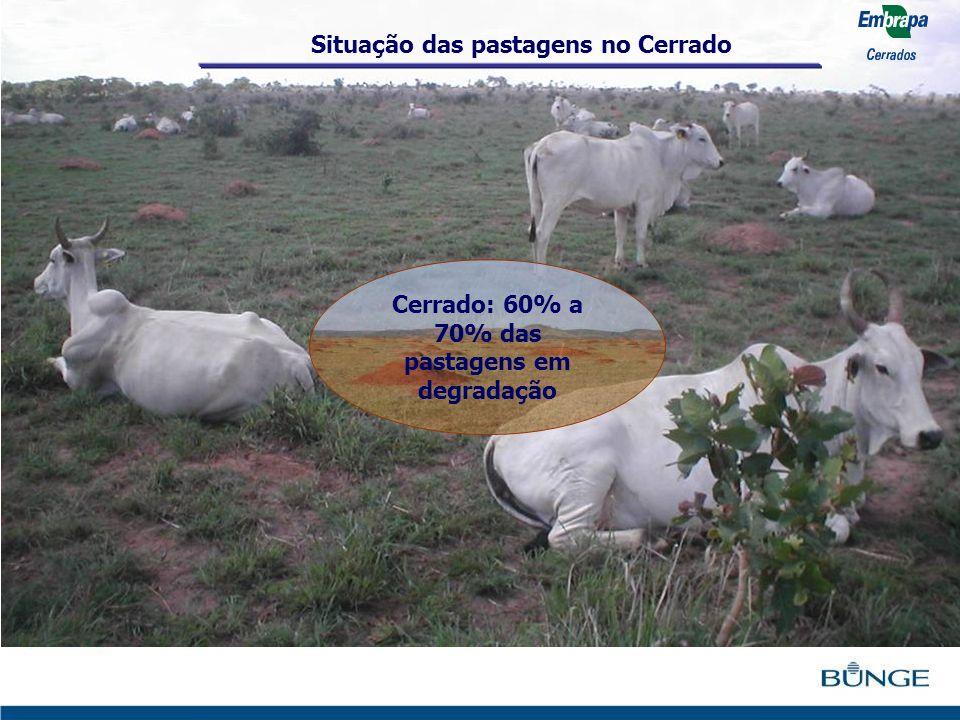 Cerrado: 60% a 70% das pastagens em degradação