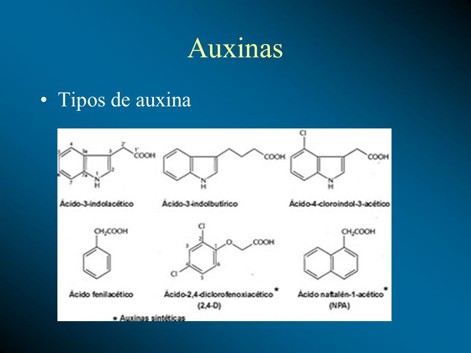 Auxinas Tipos de auxina