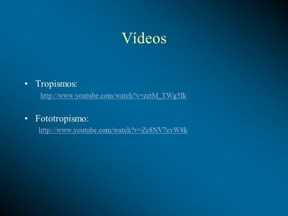 Vídeos Tropismos: Fototropismo: