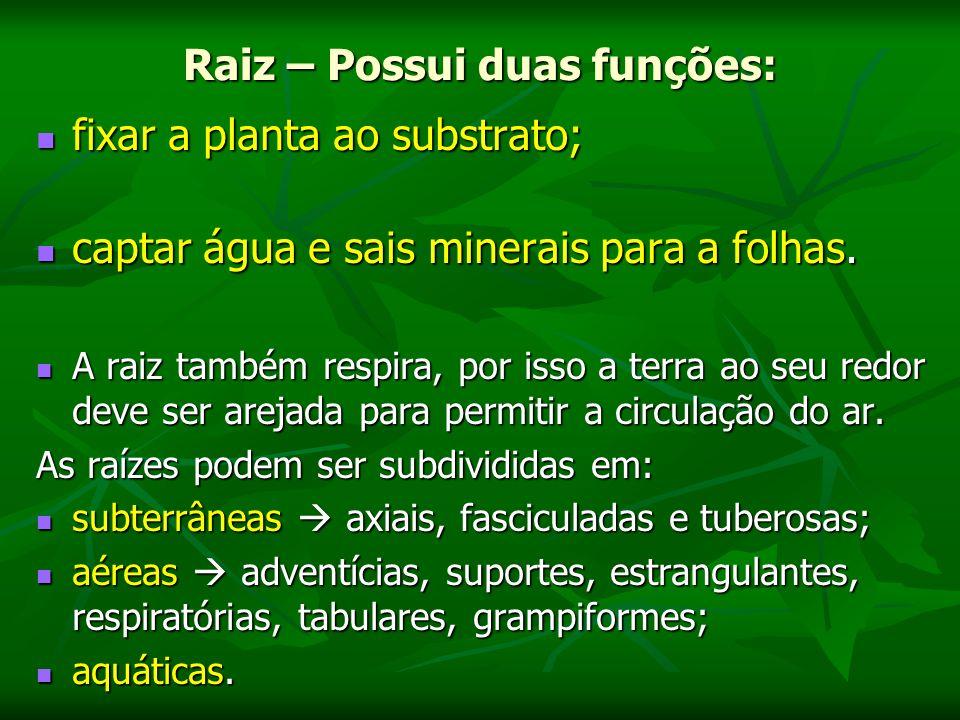 Raiz – Possui duas funções: