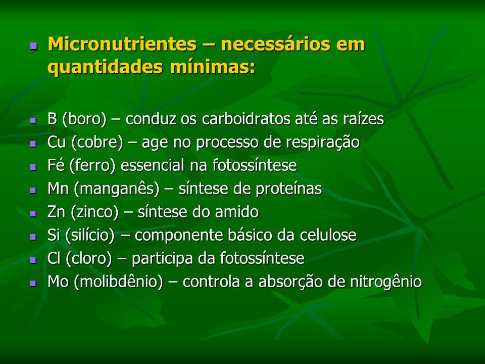 Micronutrientes – necessários em quantidades mínimas: