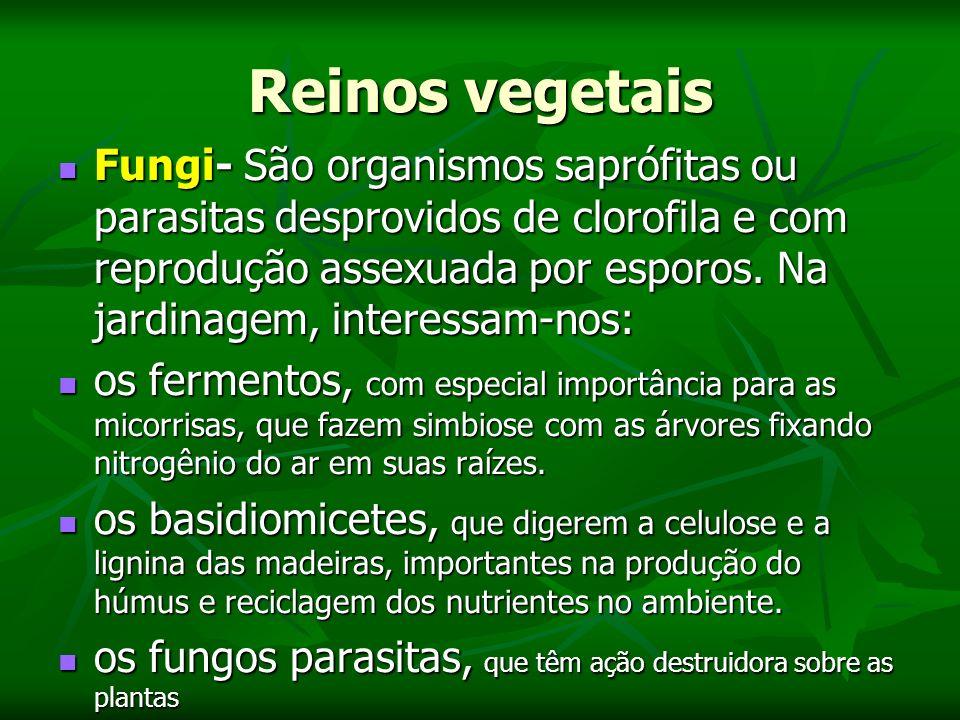 Reinos vegetais