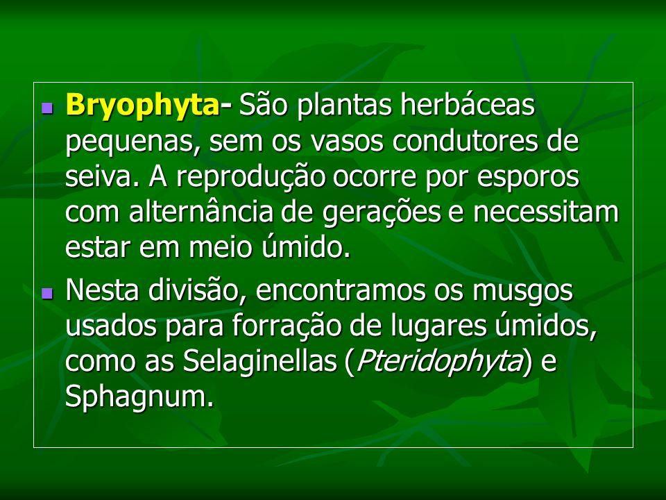 Bryophyta- São plantas herbáceas pequenas, sem os vasos condutores de seiva. A reprodução ocorre por esporos com alternância de gerações e necessitam estar em meio úmido.