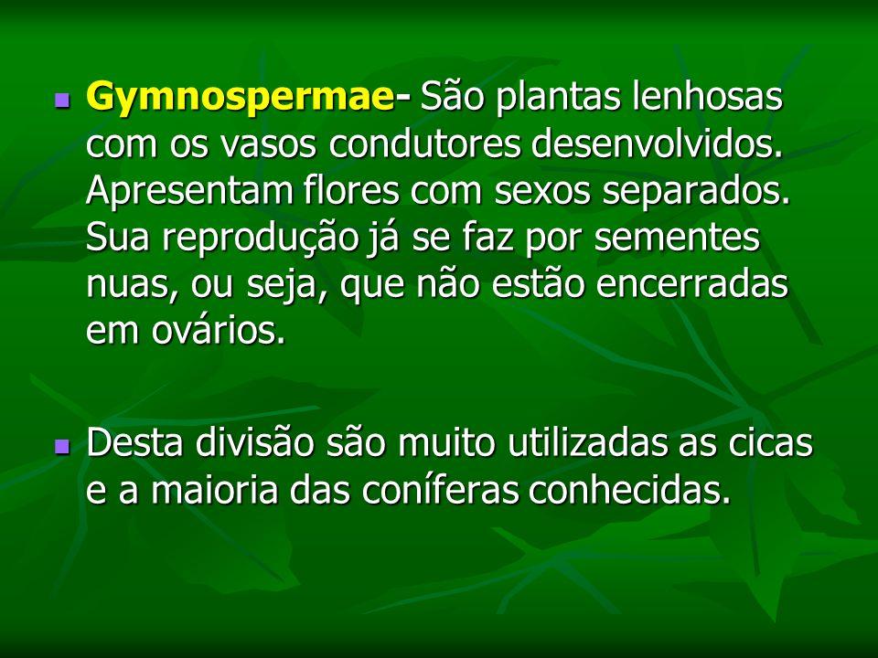 Gymnospermae- São plantas lenhosas com os vasos condutores desenvolvidos. Apresentam flores com sexos separados. Sua reprodução já se faz por sementes nuas, ou seja, que não estão encerradas em ovários.