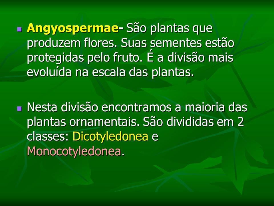 Angyospermae- São plantas que produzem flores