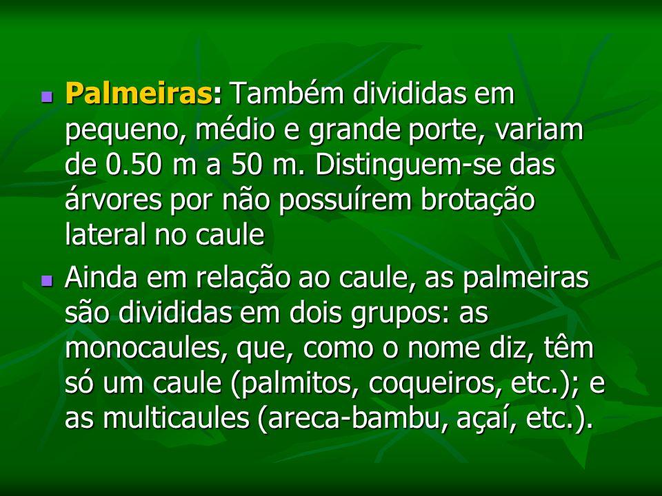 Palmeiras: Também divididas em pequeno, médio e grande porte, variam de 0.50 m a 50 m. Distinguem-se das árvores por não possuírem brotação lateral no caule
