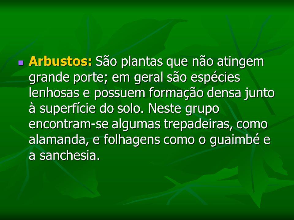 Arbustos: São plantas que não atingem grande porte; em geral são espécies lenhosas e possuem formação densa junto à superfície do solo.