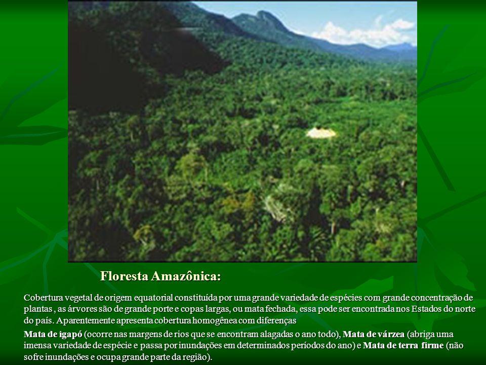 Floresta Amazônica: