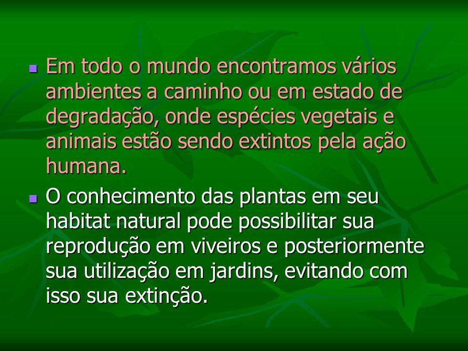 Em todo o mundo encontramos vários ambientes a caminho ou em estado de degradação, onde espécies vegetais e animais estão sendo extintos pela ação humana.