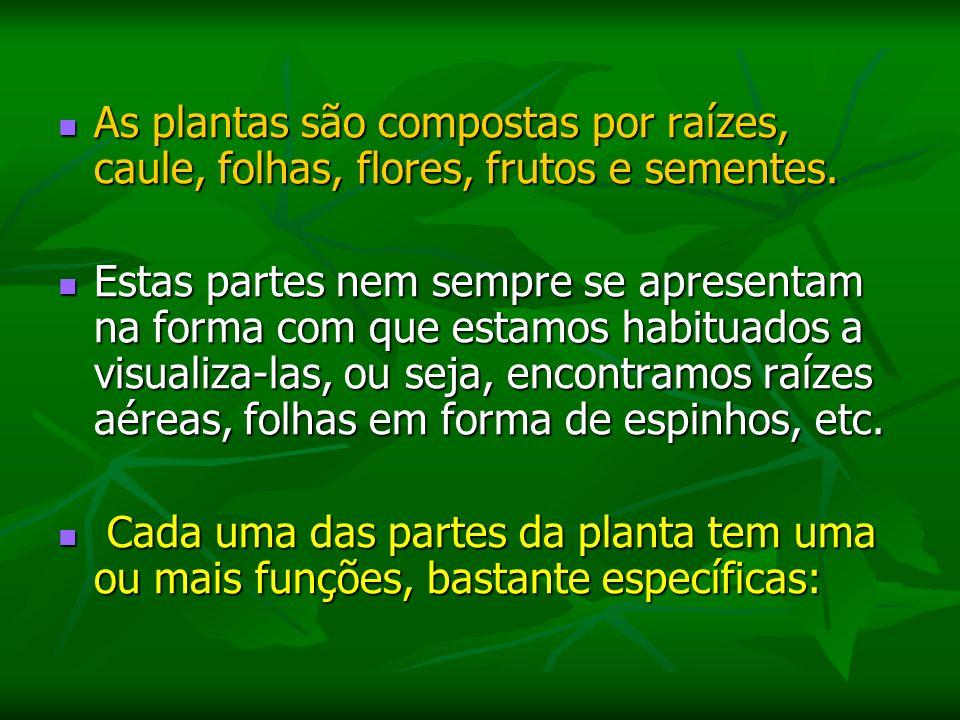 As plantas são compostas por raízes, caule, folhas, flores, frutos e sementes.