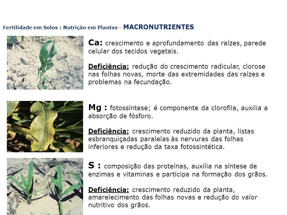 Fertilidade em Solos : Nutrição em Plantas - MACRONUTRIENTES