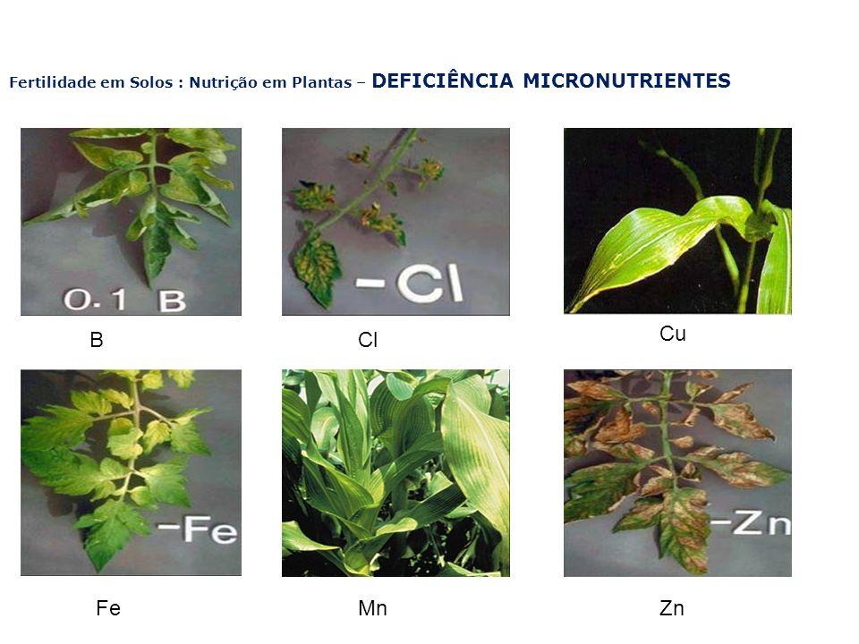 Fertilidade em Solos : Nutrição em Plantas – DEFICIÊNCIA MICRONUTRIENTES