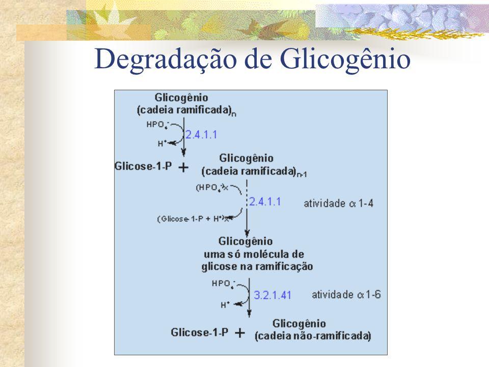 Degradação de Glicogênio