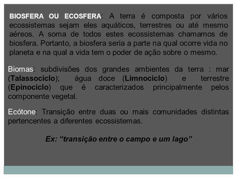Ex: transição entre o campo e um lago