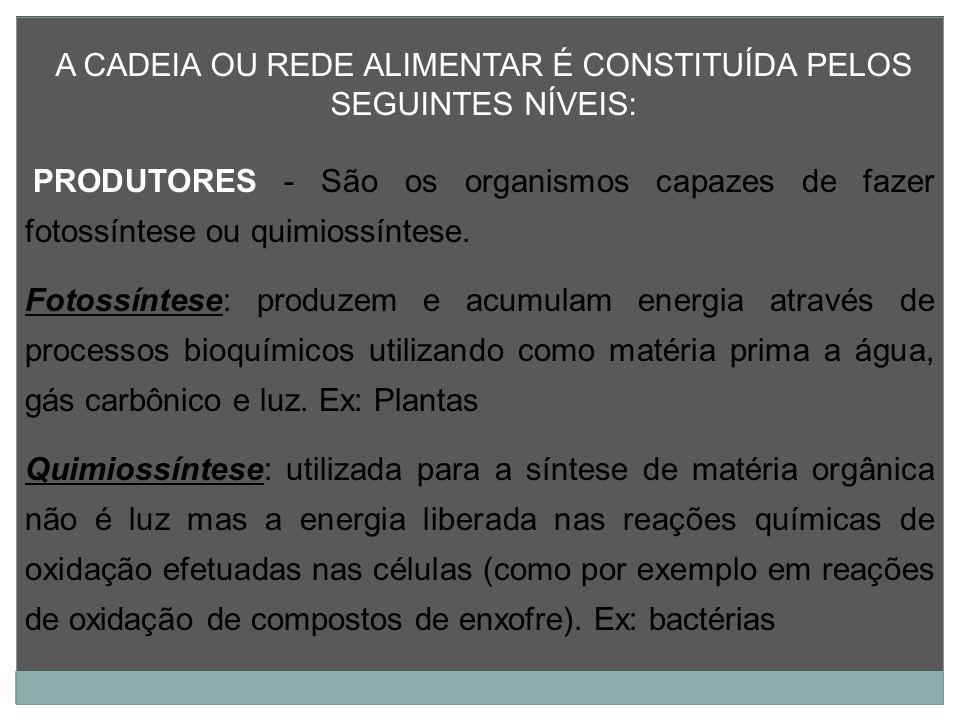 A CADEIA OU REDE ALIMENTAR É CONSTITUÍDA PELOS SEGUINTES NÍVEIS: