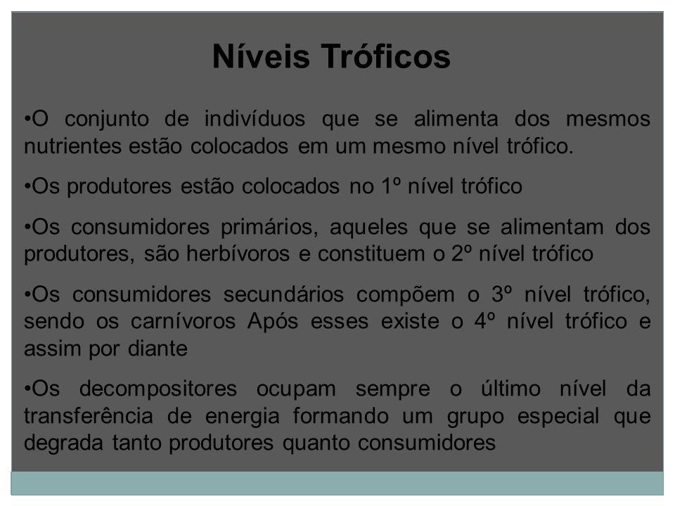 Níveis Tróficos O conjunto de indivíduos que se alimenta dos mesmos nutrientes estão colocados em um mesmo nível trófico.