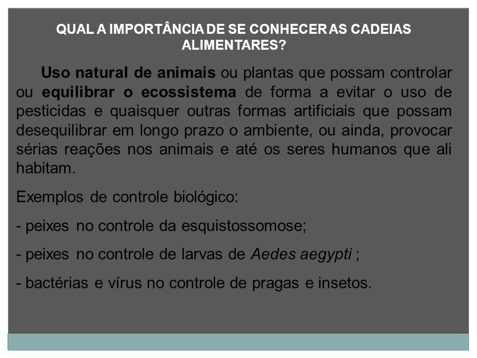QUAL A IMPORTÂNCIA DE SE CONHECER AS CADEIAS ALIMENTARES