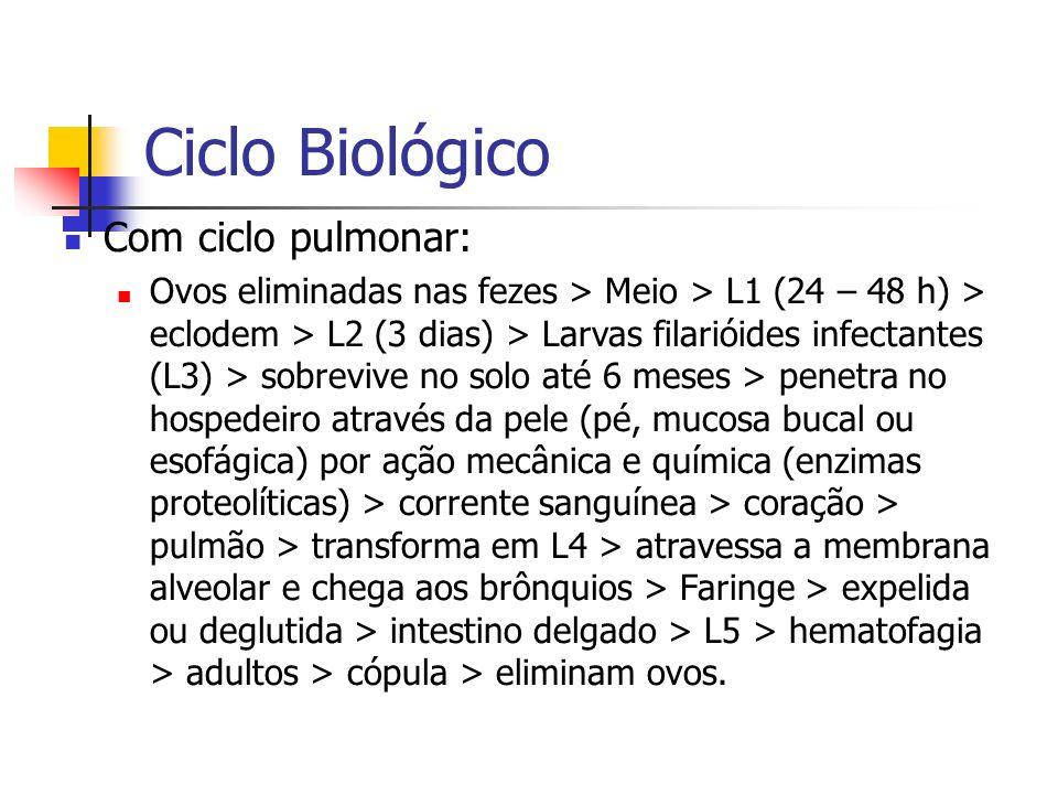 Ciclo Biológico Com ciclo pulmonar: