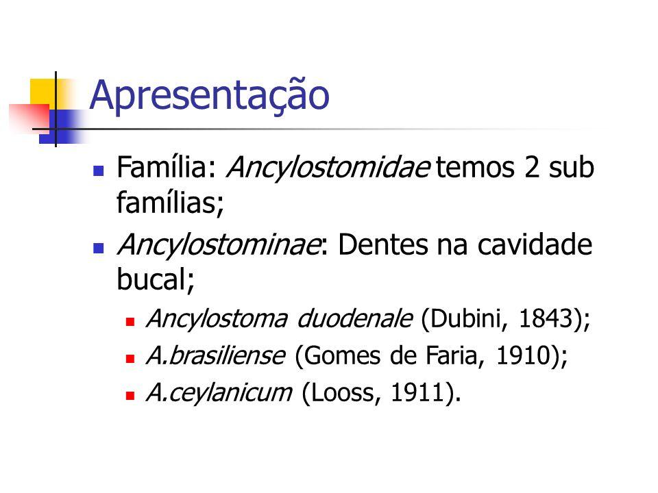 Apresentação Família: Ancylostomidae temos 2 sub famílias;