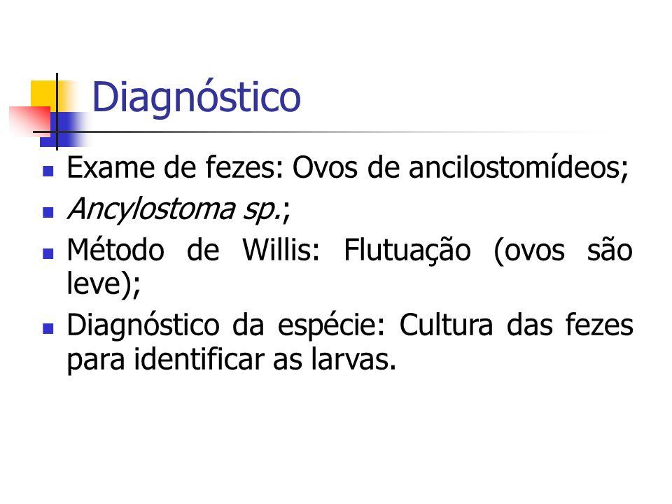 Diagnóstico Exame de fezes: Ovos de ancilostomídeos; Ancylostoma sp.;
