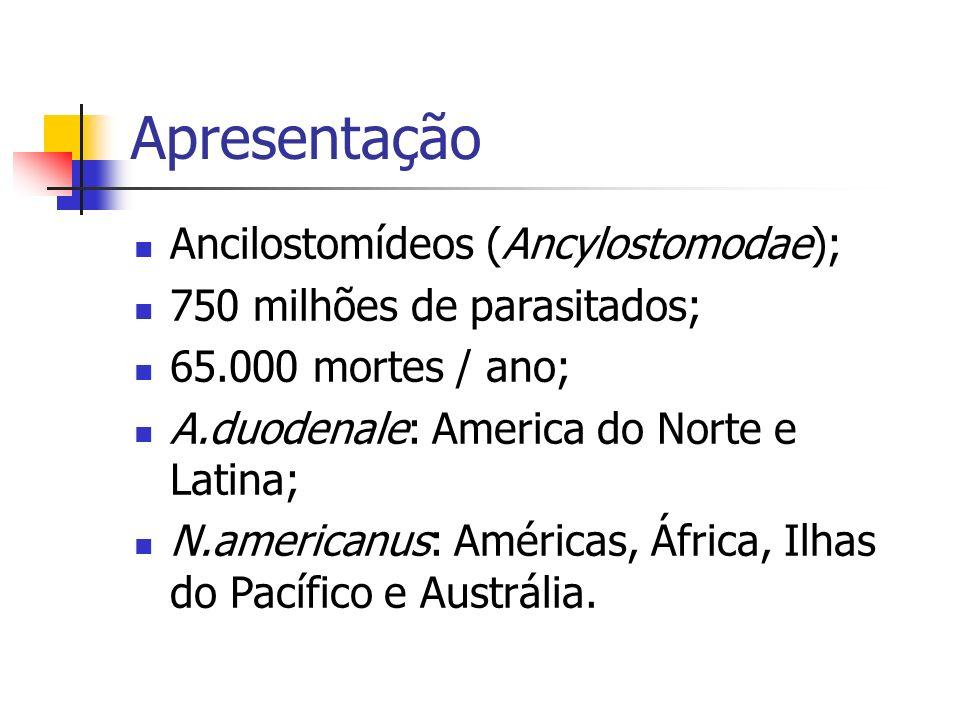 Apresentação Ancilostomídeos (Ancylostomodae);