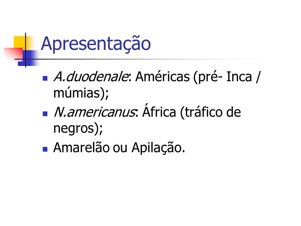 Apresentação A.duodenale: Américas (pré- Inca / múmias);