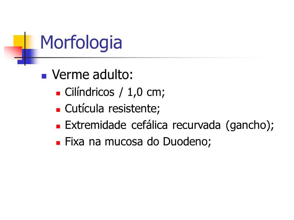 Morfologia Verme adulto: Cilíndricos / 1,0 cm; Cutícula resistente;
