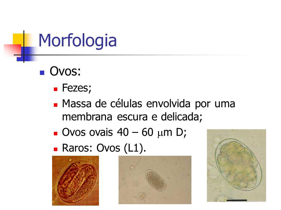 Morfologia Ovos: Fezes;