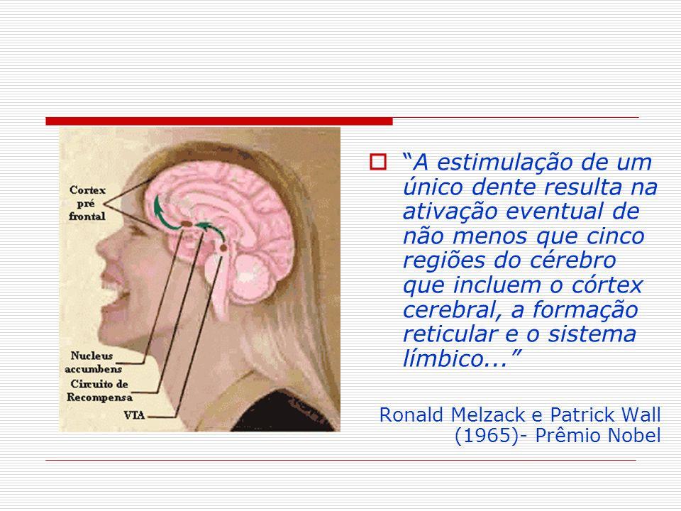 A estimulação de um único dente resulta na ativação eventual de não menos que cinco regiões do cérebro que incluem o córtex cerebral, a formação reticular e o sistema límbico...
