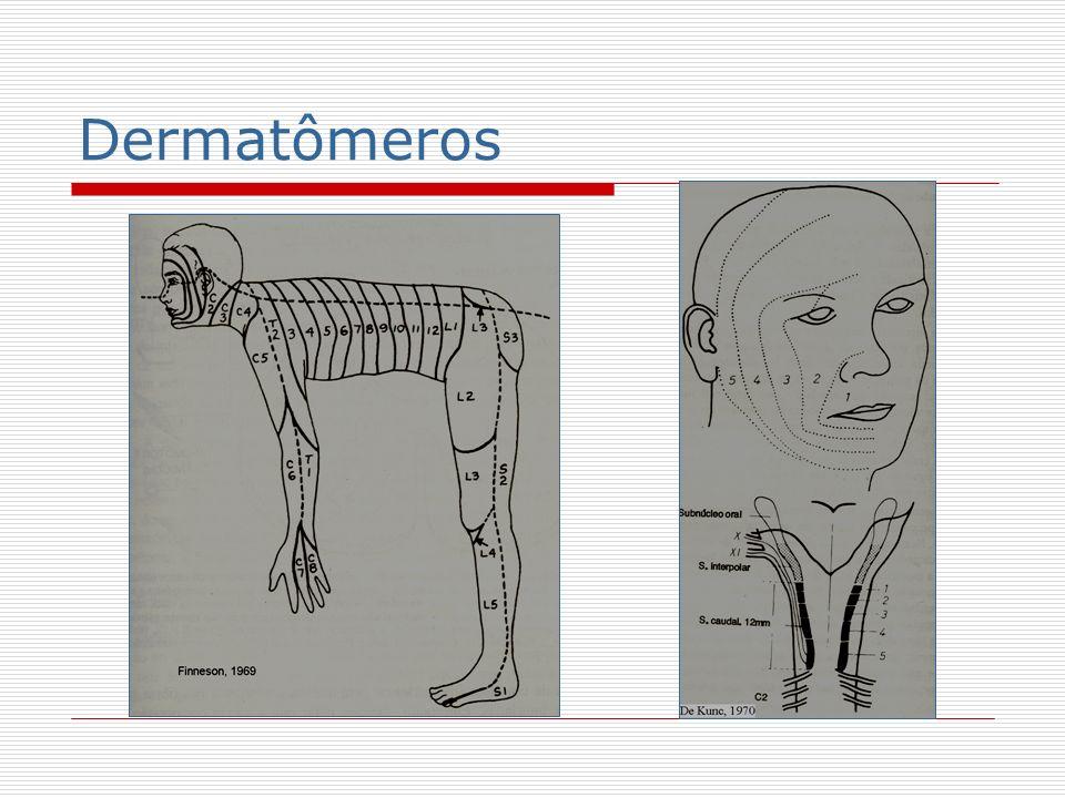Dermatômeros