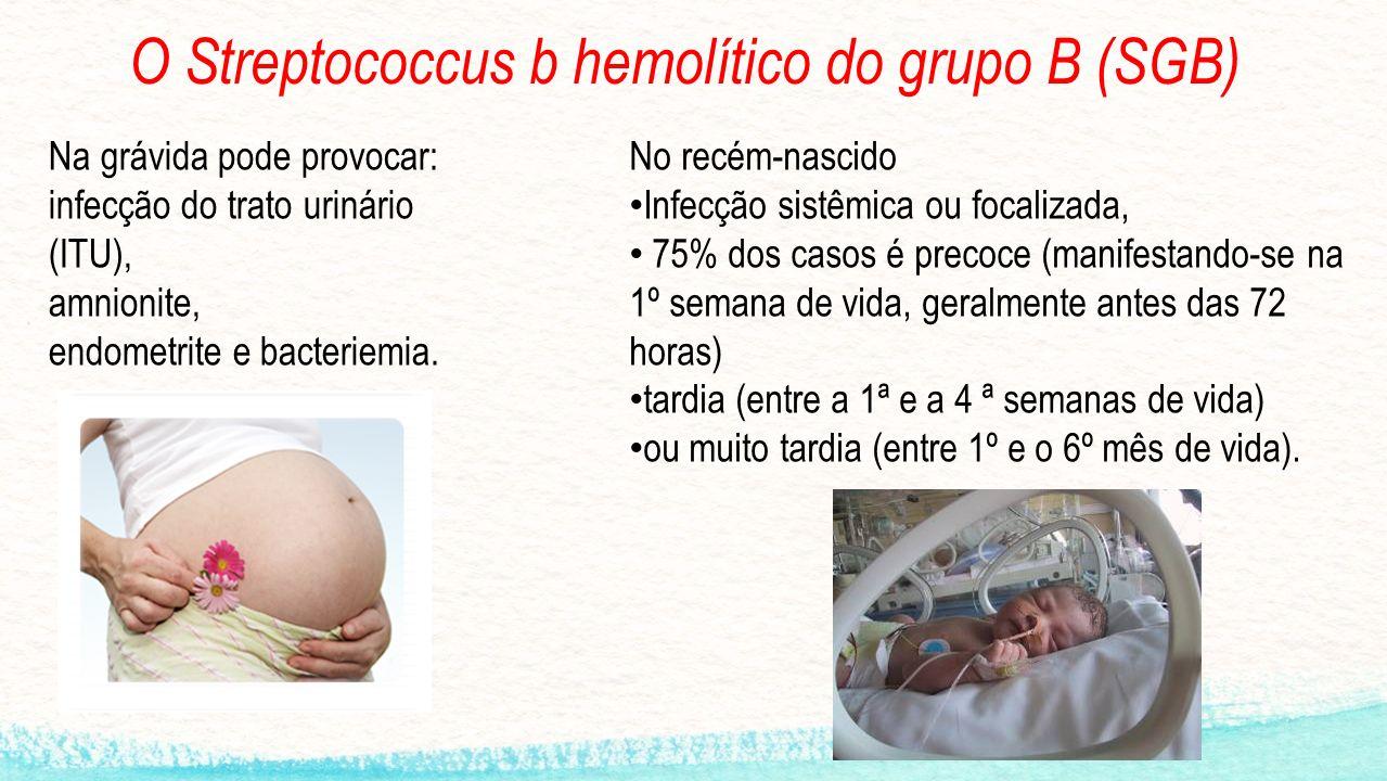 O Streptococcus b hemolítico do grupo B (SGB)