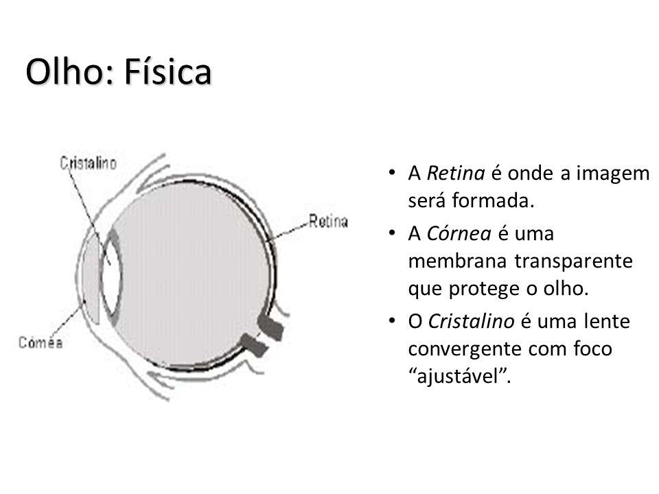 Olho: Física A Retina é onde a imagem será formada.