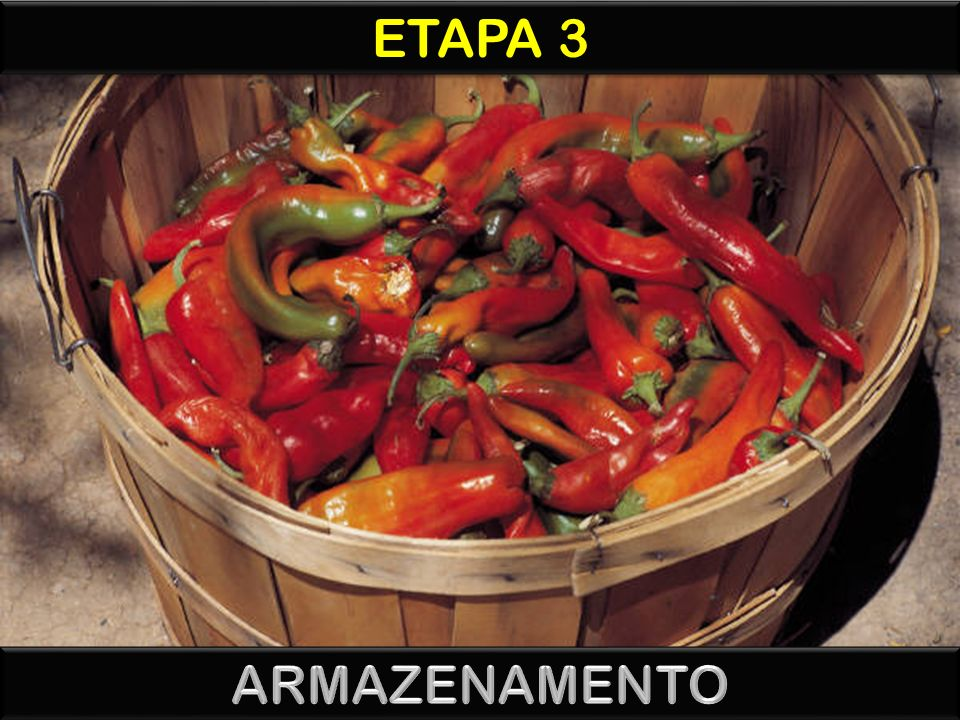 ETAPA 3 ARMAZENAMENTO