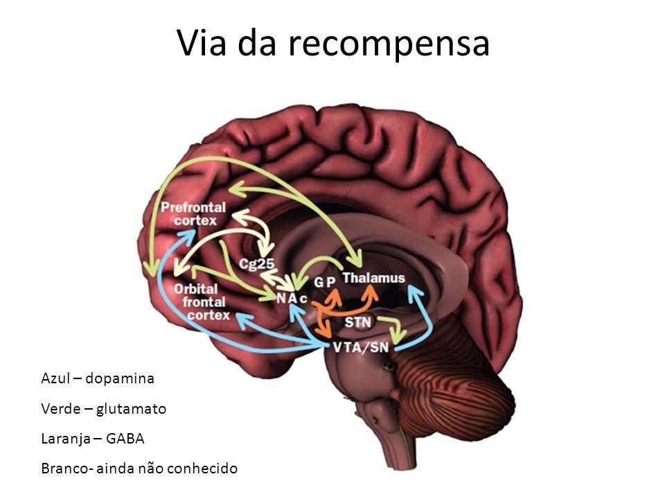 Via da recompensa Azul – dopamina Verde – glutamato Laranja – GABA