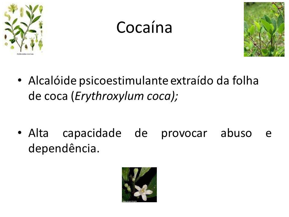 Cocaína Alcalóide psicoestimulante extraído da folha de coca (Erythroxylum coca); Alta capacidade de provocar abuso e dependência.