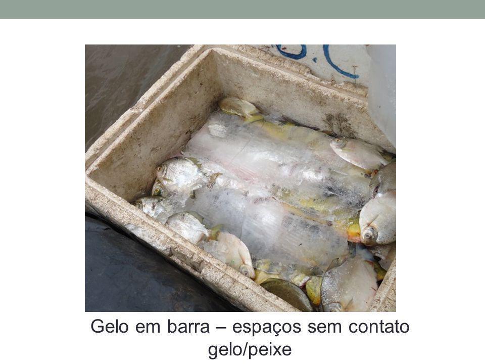 Gelo em barra – espaços sem contato gelo/peixe