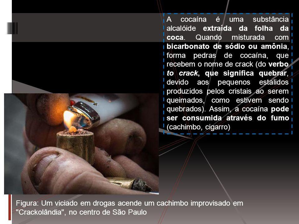 A cocaína é uma substância alcalóide extraída da folha da coca