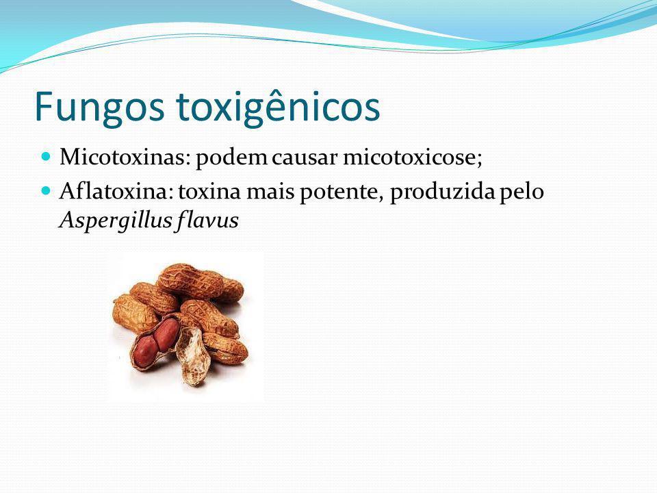 Fungos toxigênicos Micotoxinas: podem causar micotoxicose;