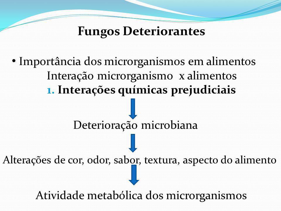 Importância dos microrganismos em alimentos