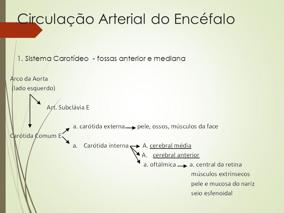 Circulação Arterial do Encéfalo