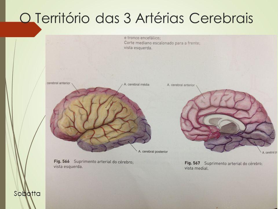 O Território das 3 Artérias Cerebrais