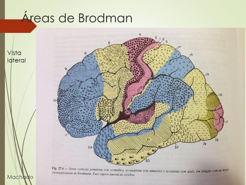 Áreas de Brodman Vista lateral Machado