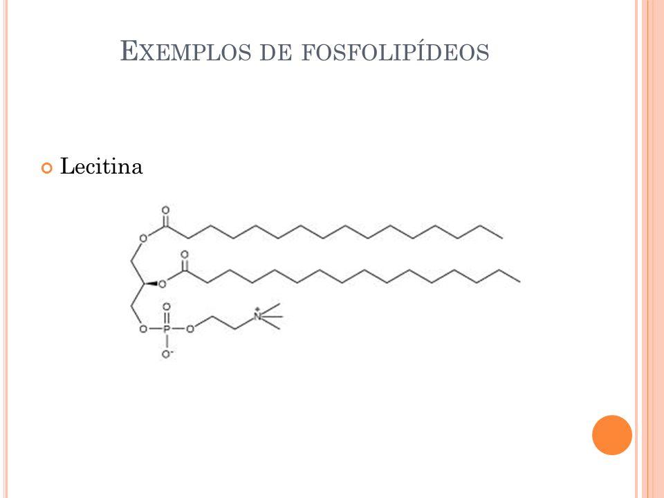 Exemplos de fosfolipídeos