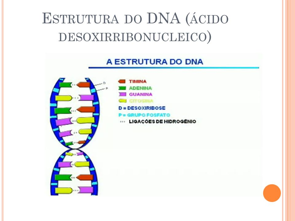 Estrutura do DNA (ÁCIDO DESOXIRRIBONUCLEICO)