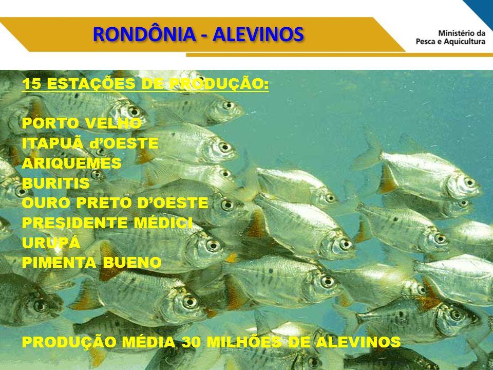RONDÔNIA - ALEVINOS 15 ESTAÇÕES DE PRODUÇÃO: PORTO VELHO